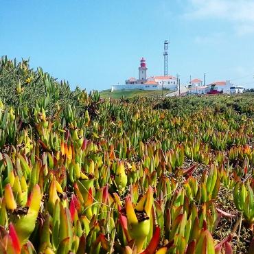 Farol e a vegetação nativa de Cabo da Roca