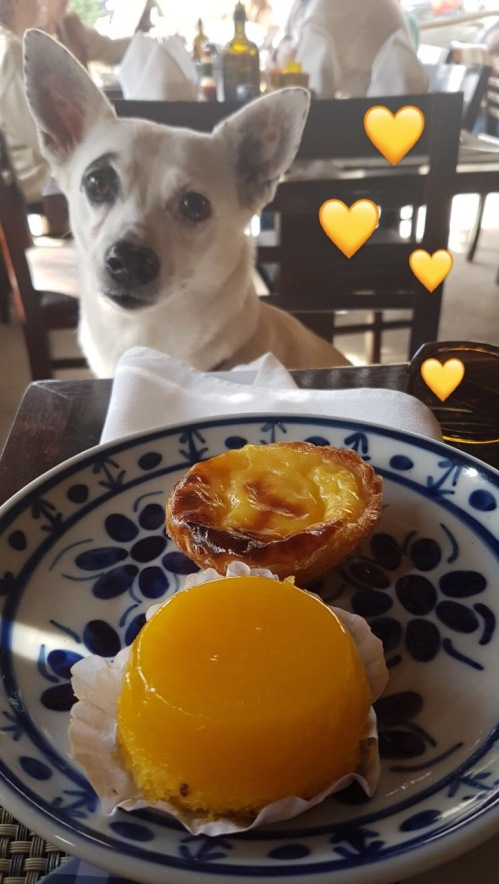 Restaurante Quinta do Olivardo é pet friendly- Pastel de Nata e Quindin